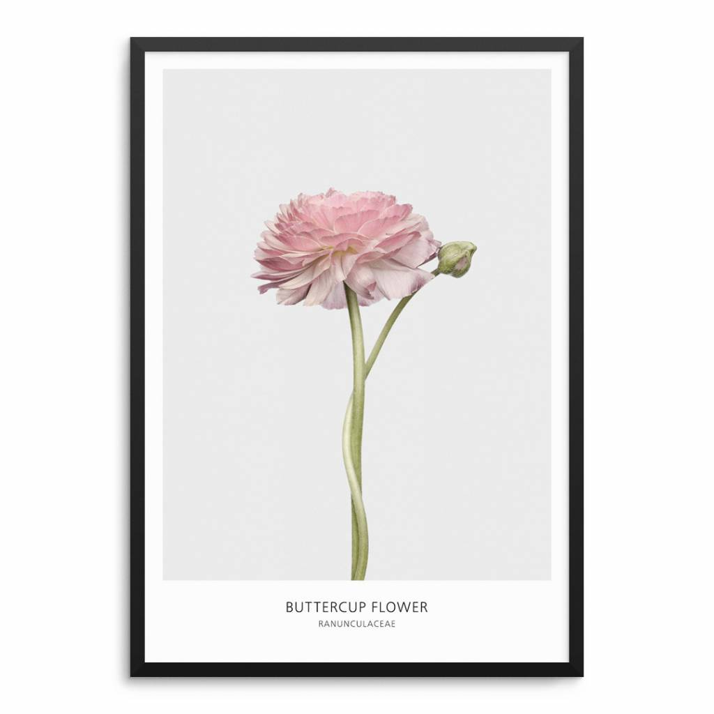 Lovely Bird Buttercup Flower Poster
