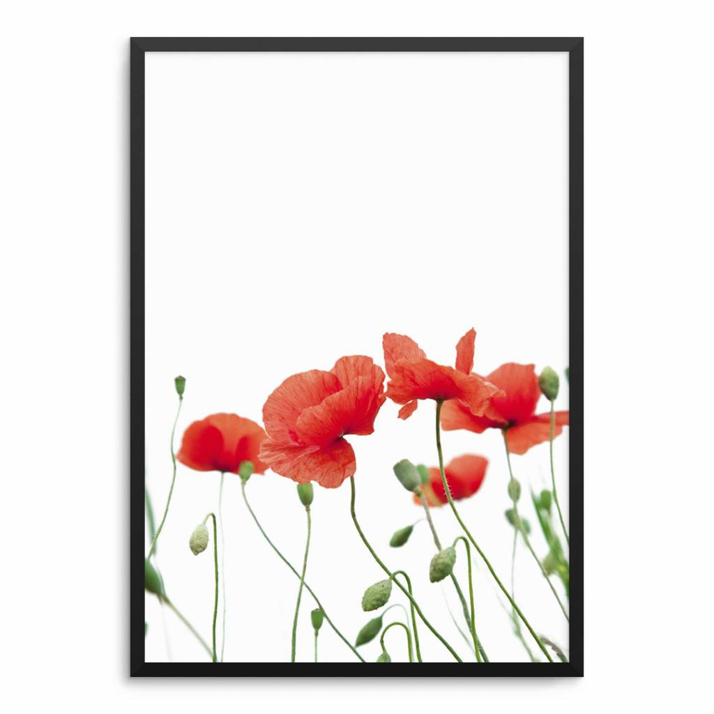 Lovely Bird Poppy Flowers Poster