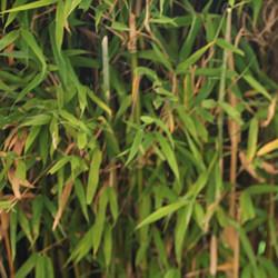 Was ist eigentlich Bambusfaser?