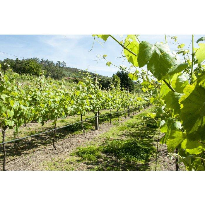 Vinho Verde Alvarinho 2018
