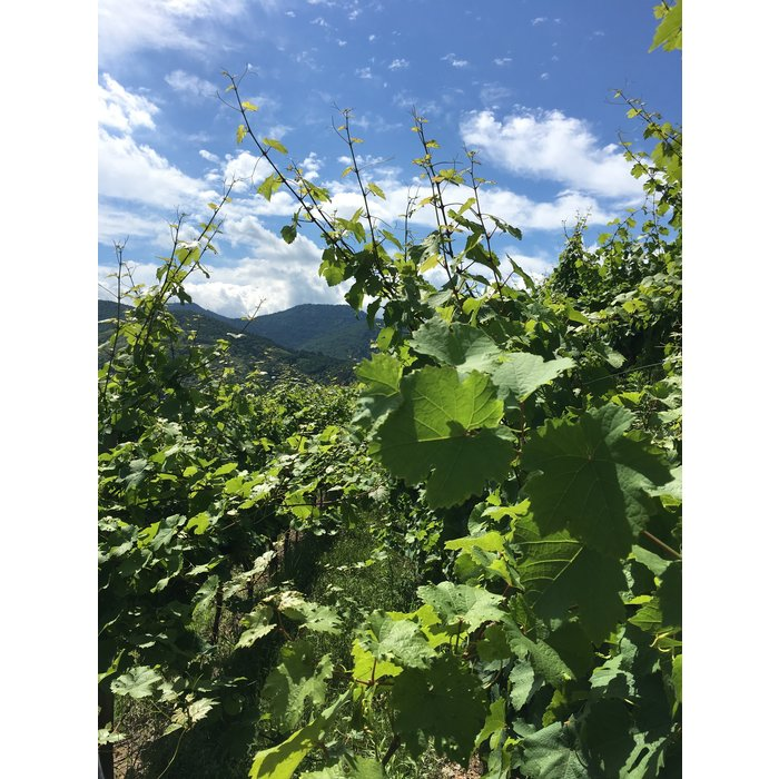 Riesling d'Alsace 2019