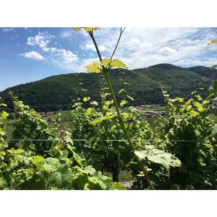 Pinot Blanc Le Litre 2019
