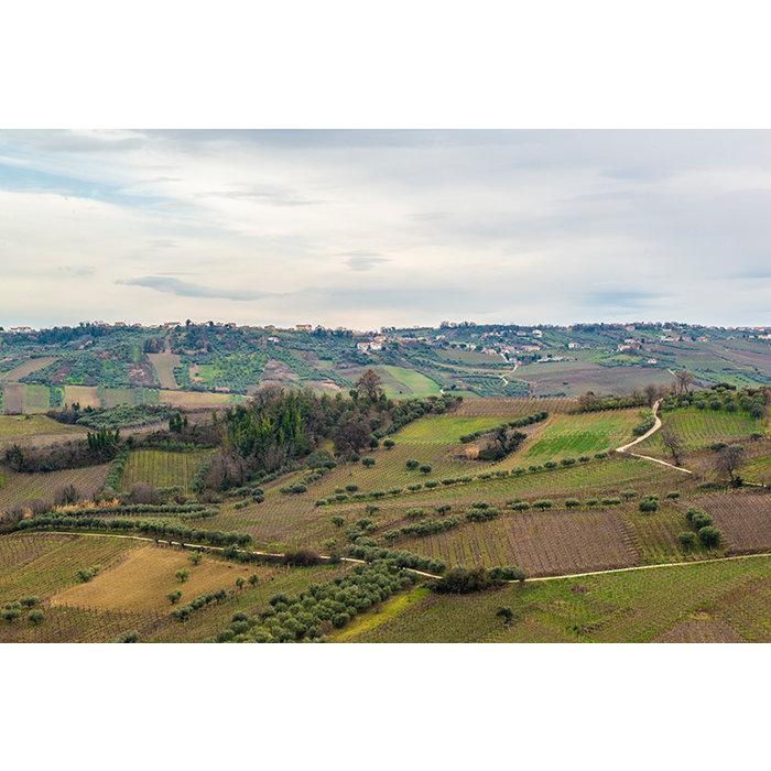 Sidhuri Trebbiano d'Abruzzo