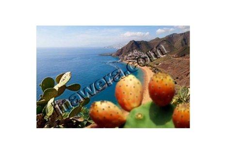 Inawera Konzentriertes Kaktus Aroma - Aroma zum Liquid Mischen mit einer Base