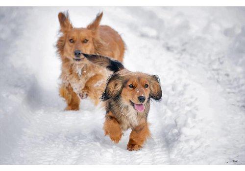 Honden in de sneeuw 28 september