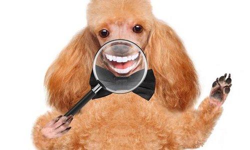 De beste botten voor een gezond hondengebit