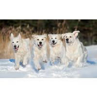 Honden in de sneeuw vrijdag 27 september