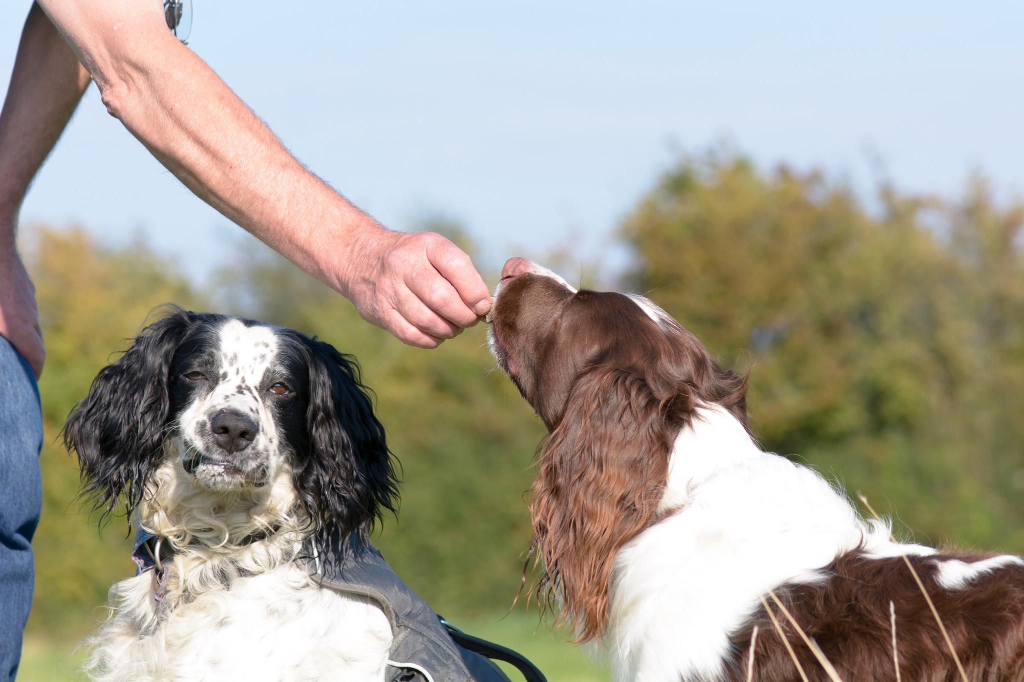 De 5 beste natuurlijke beloningssnacks voor je hond