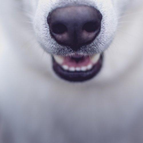 Heeft jouw hond een lekke bek?