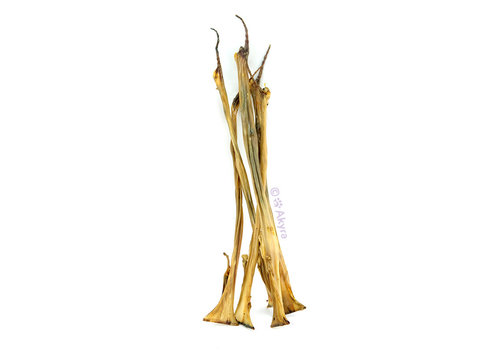 Akyra Konijnenhuid 50 cm 500 gram