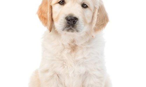 De 6 belangrijkste supplementen voor je hond