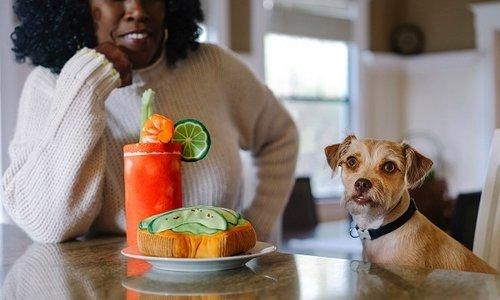 De allerhipste hondenspeeltjes