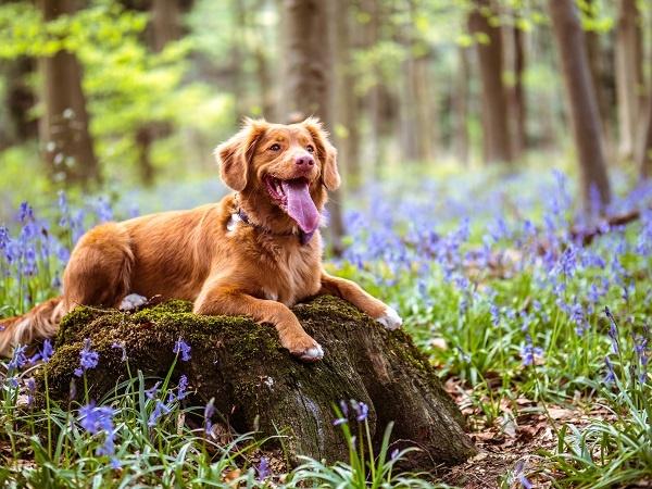 Supplementen voor je hond