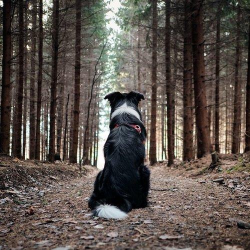 De voordelen van natuurlijke hondenvoeding