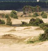 Staatsbosbeheer Wandelkaart 24 Midden-Veluwe, picture 374913964