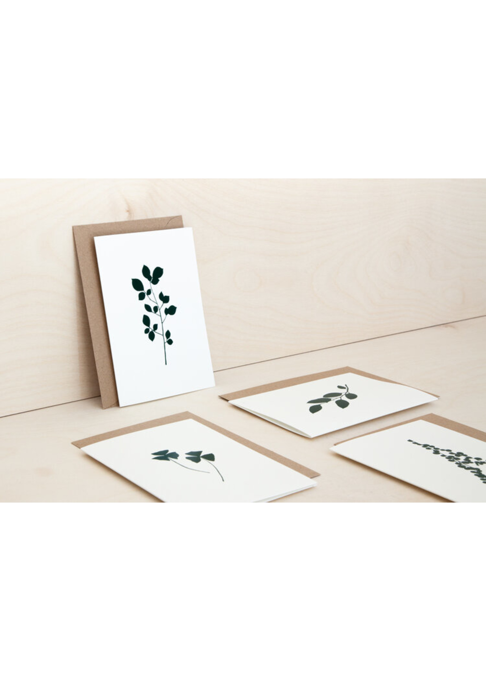 Ola Ola Foil Blocked Card Botanical Collection - Oxalis Print in Ivory/Green