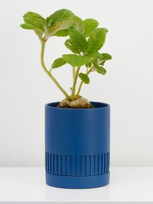 Capra Designs Etch Planter - 4 colours