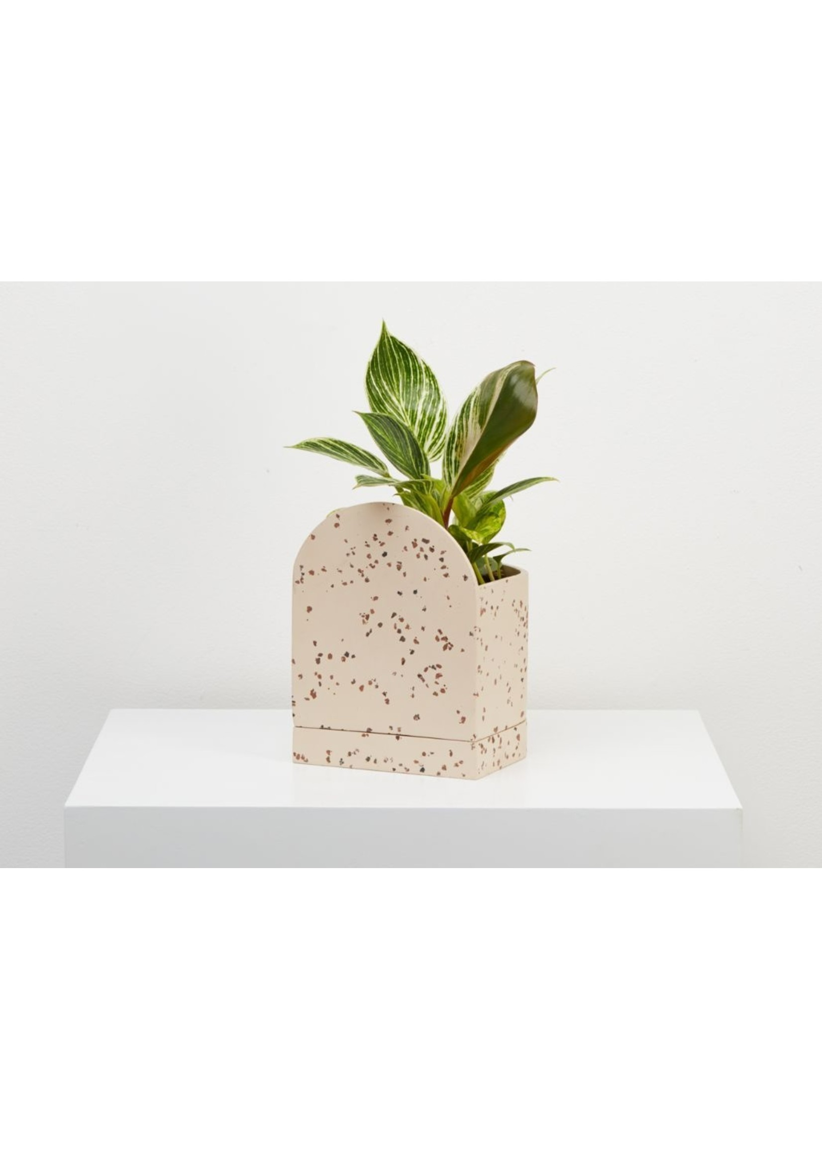 Capra Designs Capra Designs Sol Planter Terrazzo Fossil/Cream