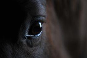 Redewendungen ums Pferd