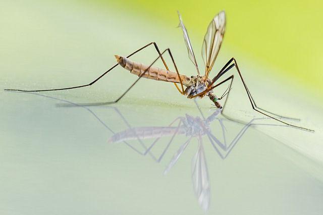 Mückenspray selbst gemacht
