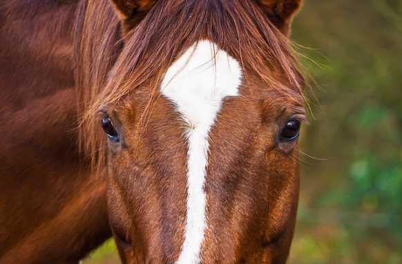 Gibt es Sattel speziell für ältere Pferde?