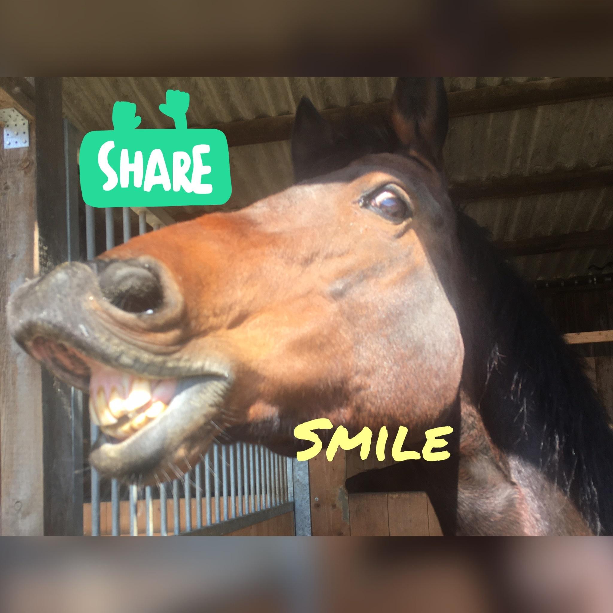 Ein Mutmacher für alle Pferdebesitzer