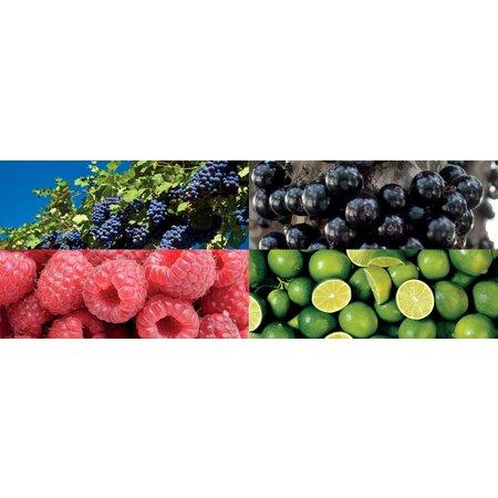 Kerri Sticker Blauwe Druiven Voor Kerri Fietskrat
