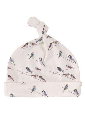 Pigeon Knoopmutsje Birds