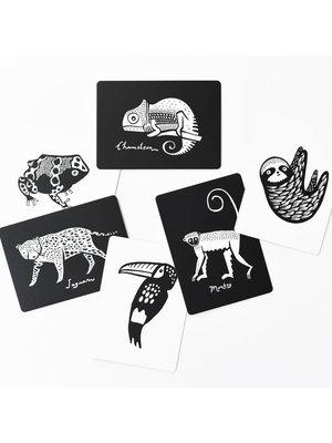 Wee Gallery Art cards Rainforest