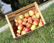 Bioland Äpfel