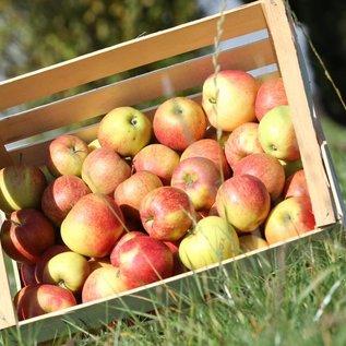 Äpfel  Jonagold