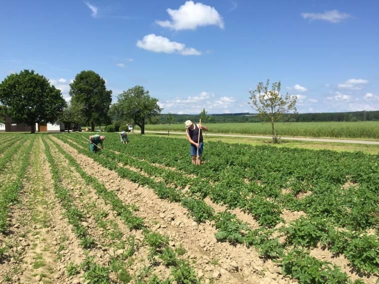 Bioland Kartoffelanbau
