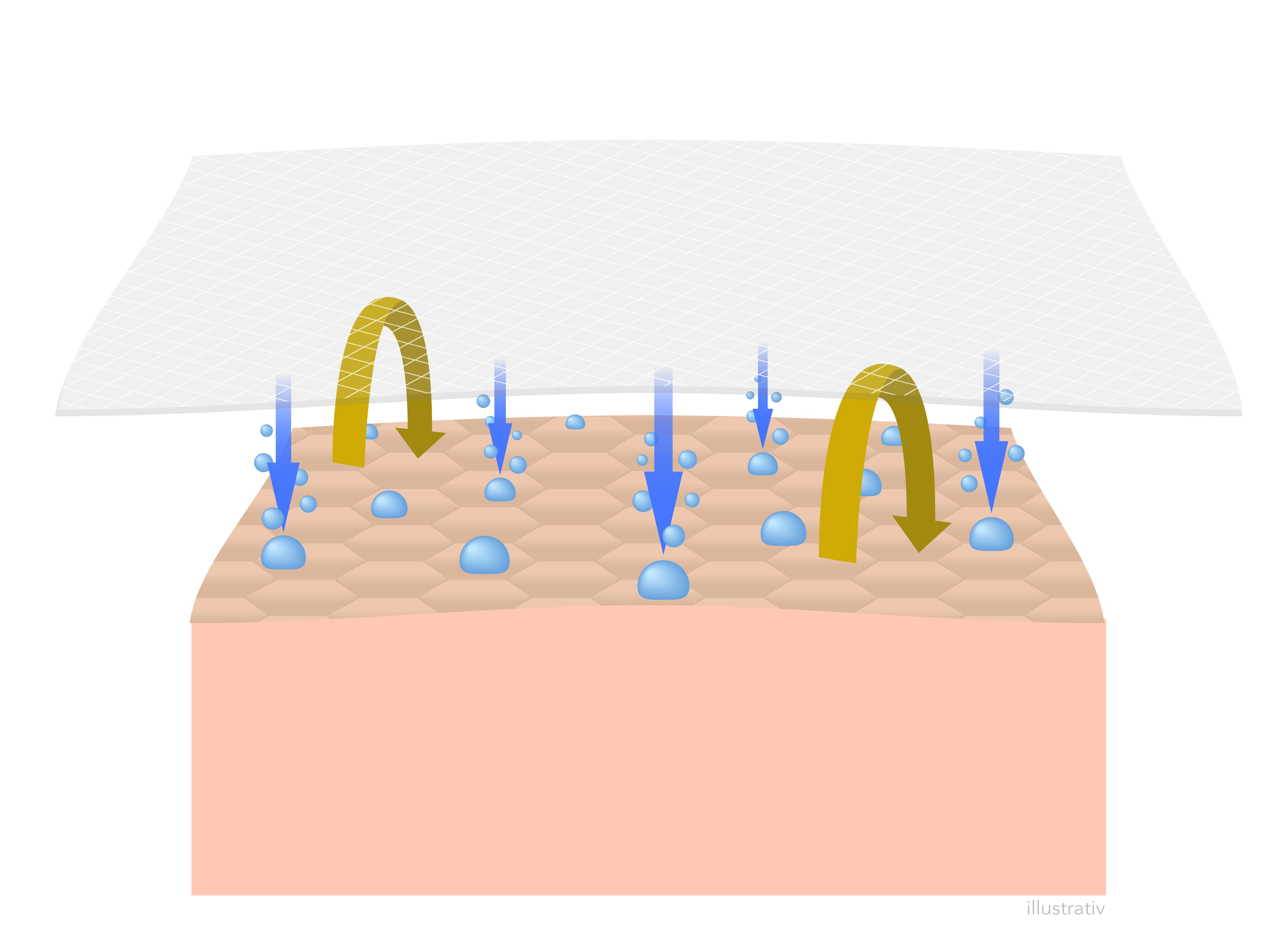 Das Schaubild zeigt die Hautzellen und Wirkungsweise von Konivéo Face Masks