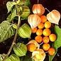 - Orange mit Andenbeere 74%, 70g