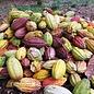 - ORGANIC 85% COCOA dunkle Schokolade | Chocolaterie Robert Malagasy, 85g