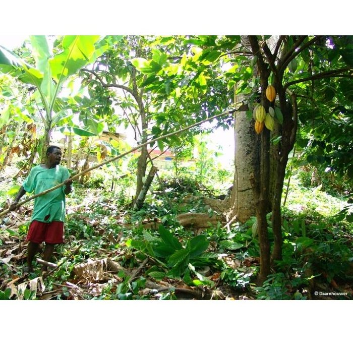 - Grenada 70% Arawaks, 100g