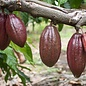 - vegane Kokosnussmilchschokolade 60%, 50g