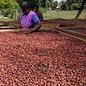 - Dunkle Schokolade Minze und Nibs 60%, 50g
