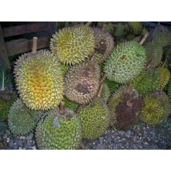 - Dunkle Milchschokolade mit Durian 61%, 57g