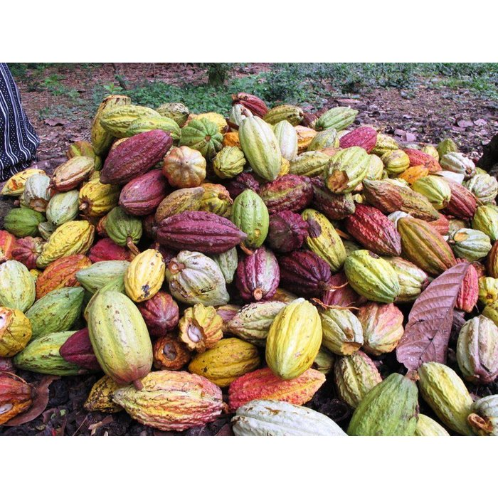 - 70% COCOA BIO dunkle Schokolade, (10x100g=1kg)