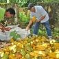 - Dominikanische Republik 75% mit Haselnuss BIO, 70g