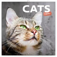 Katzen & Kätzchen Kalender 2019