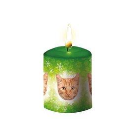 Otter House Rot Tabby Katze Kerze