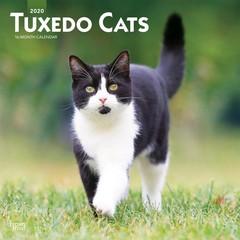 Katze & Kätzchen Kalender 2020