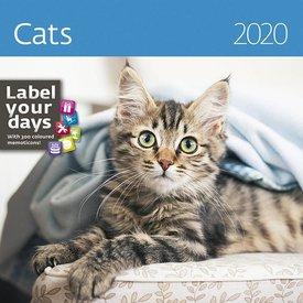 Helma Katzen - Cats Kalender 2020