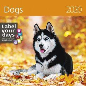 Helma Hunde - Dogs Kalender 2020