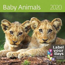 Helma Babydieren - Baby Animals Kalender 2020