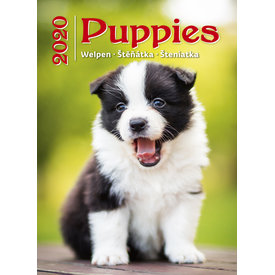 Helma Puppy 24x33 Kalender 2020