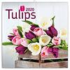 Tulpen - Tulips Kalender 2020