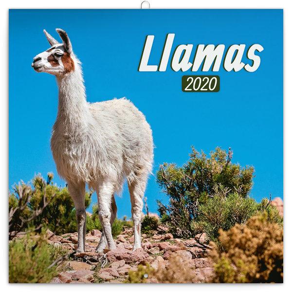 Presco Llamas Kalender 2020
